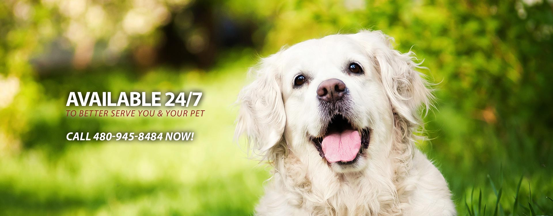 24 Hour Tempe Veterinary Service